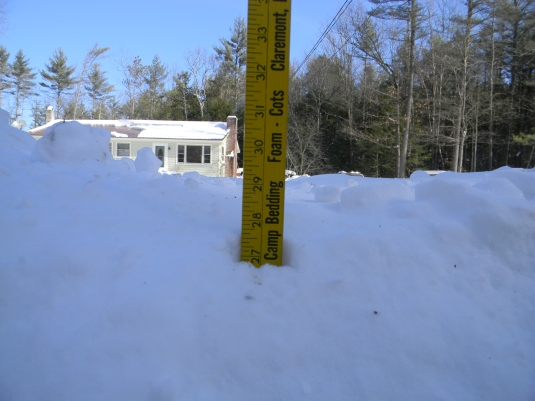 Total snow fall from NEMO